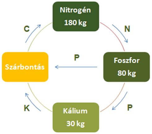 AZOTER hatásmechanizmus